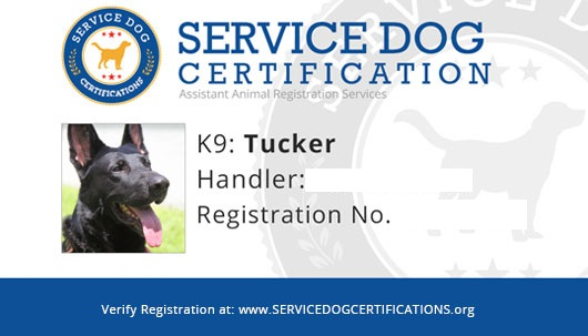Wanting to Have a Service Dog? Check Here if You Are Qualified
