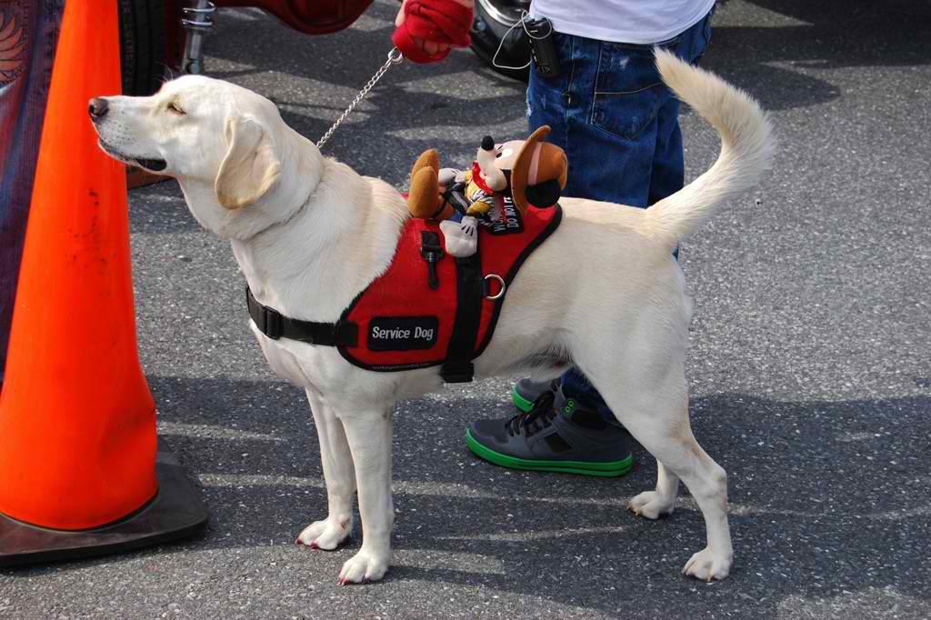 Identifying Fake Service Dog Proof