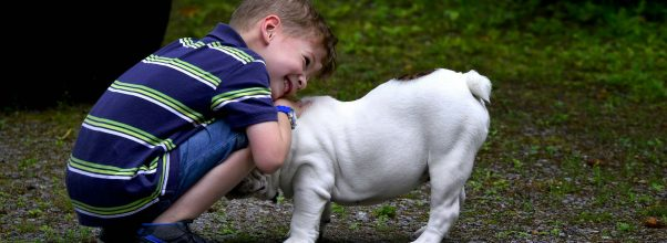 service dog breeds for autism