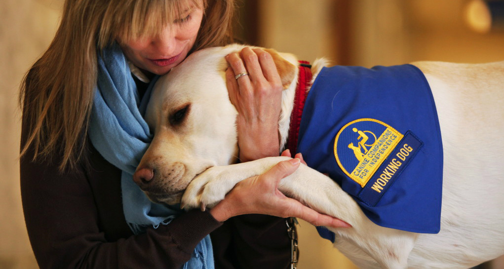 Best Service Dog Breeds for PTSD - Emotional and ...